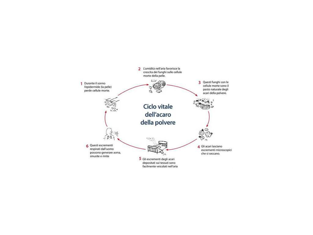 Come Uccidere Acari Della Polvere campagna prevenzione allergie 2019